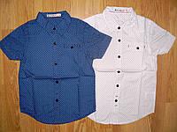 Рубашки на мальчика оптом, Glo-story, 98, 104 рр