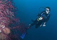Подводный фонарь для дайвинга BL PF02 , фото 1
