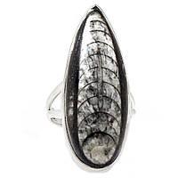 Ортоцерас, серебро 925, кольцо, 424КО