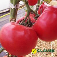 Семена томата Данубио F1 / Danubio F1 от Клауз (Clause)