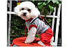 """Комбинезон  с футболкой, костюм """"Мишутка"""" для собаки. Одежда для собаки, фото 4"""