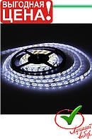 Лента светодиодная 300 SMD5050
