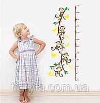 Интерьерная наклейка в детскую - ростомер Обезьянки , фото 2