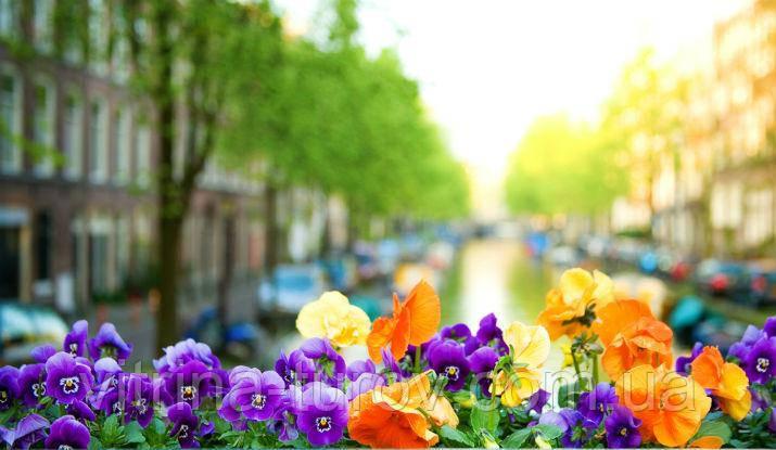 """Экскурсионный тур в Европу """"Весна в Амстердаме"""""""