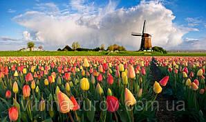 """Экскурсионный тур в Европу """"Майские праздники в Амстердаме"""""""