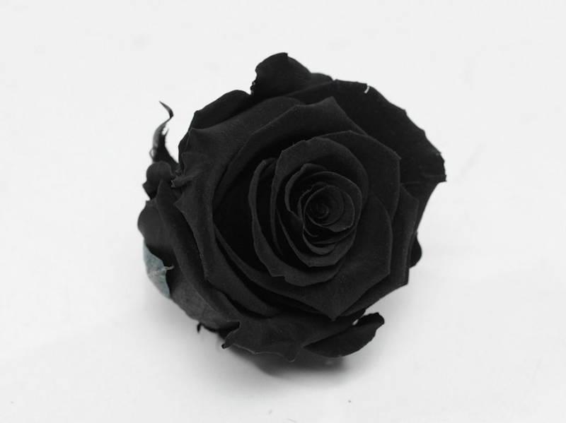 Роза стабилизированная бутон черный для декора и флористики