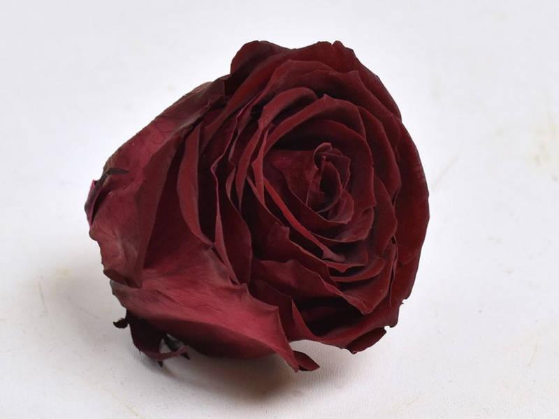 Роза стабилизированная бутон темно бордовый для декора и флористики