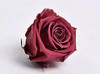 Роза стабилизированная бутон клюква для декора и флористики