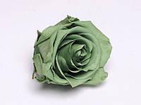 Роза стабилизированная бутон зеленый для декора и флористики