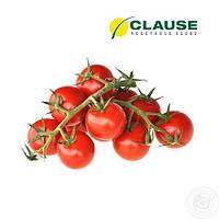 Семена томата Реги F1 / Regy F1 от Клауз (Clause)