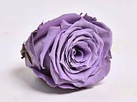 Роза стабилизированная бутон темно фиолетовый для декора и флористики набор из 6шт диаметр 4.5-5.5см, фото 2