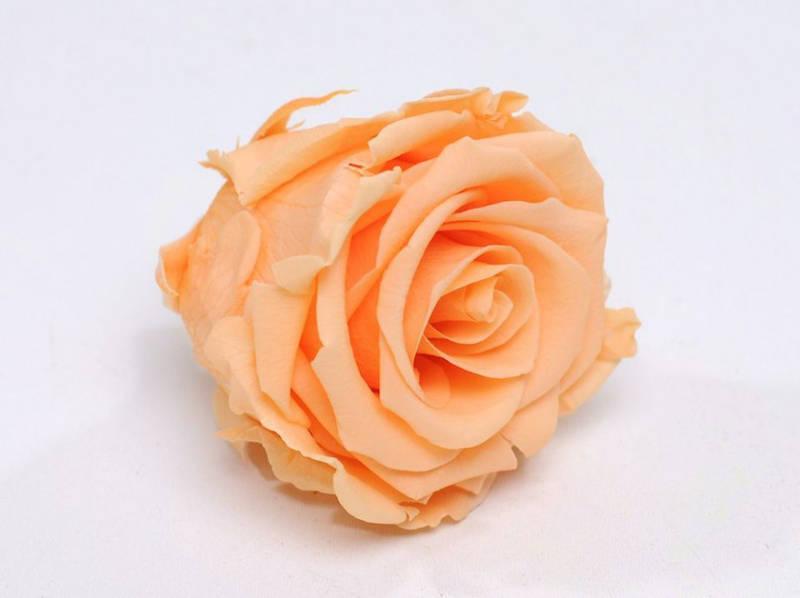 Роза стабилизированная бутон персиковый для декора и флористики