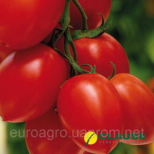 Семена томата Тенорио F1   Tenorio F1 от Клауз (Clause), 5000 семян ... 2e9c7ccc31d