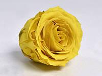 Роза стабилизированная бутон желтый для декора и флористики