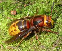Уничтожение грызунов и  насекомых