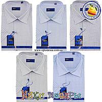 Мужские классические рубашки с коротким рукавом (ворот 39- 45) (vk34c)