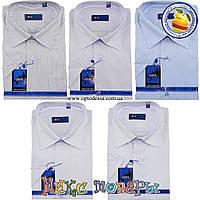 Мужские однотонные рубашки в мелкую полоску с коротким рукавом (ворот 39- 45) (vk34a)