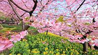 Отдушка  для мыла Весенний сад, Floressence