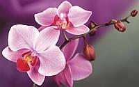 Отдушка  для мыла Орхидея, Floressence