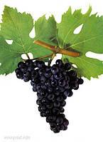 Отдушка  для мыла Черный Виноград, Floressence