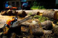 СПИЛ, распил деревьев по частям