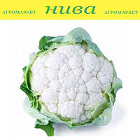 Консепт F1 семена капусты цветной Sakata 1 000 семян