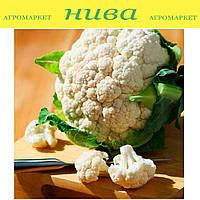 Бета семена капусты цветной Moravoseed 1 000 г