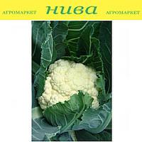 Октавия семена капусты цветной Moravoseed 1 000 г
