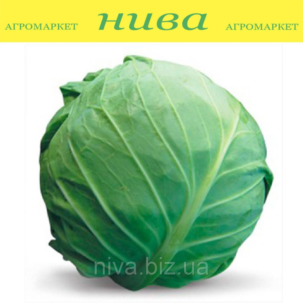 Голден Бол F1 насіння капусти б/к ранньої NongWoo Bio 2 500 насінин