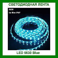 Лента светодиодная синяя LED 5630 Blue - 5 метров в силиконе!Акция