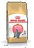Royal Canin Kitten British Shorthair 10 кг для котят британцев