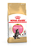 Royal Canin Maine Coon Kitten 2 кг для котят мейн кун