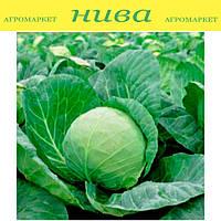 Лема F1 (Lema F1) семена капусты белокачанной Rijk Zwaan 2 500 семян