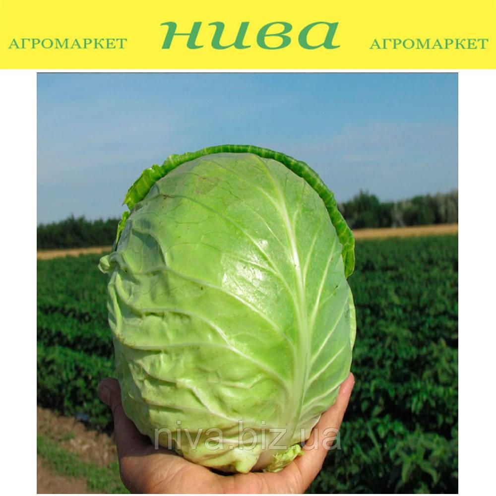 Аванте F1 насіння капусти б/к середньоранньої Lucky Seed 10 000 насінин