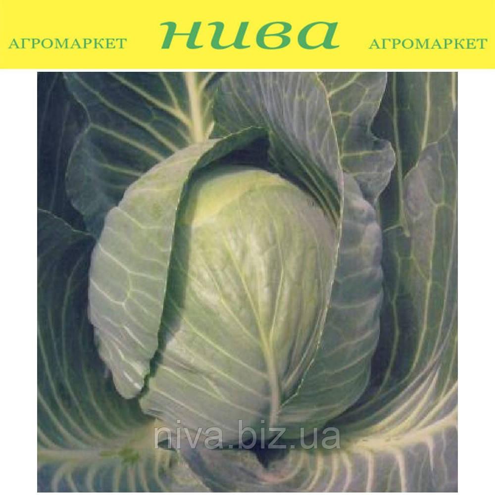 Кастелло F1 насіння капусти б/к ранньої Hazera 2 500 насінин