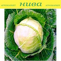 Крафт F1 насіння капусти б/к середньоранньої Semenaoptom 10 000 насінин