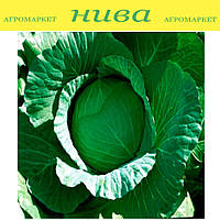 Лаура F1 (AGX-701 F1) семена капусты белокачанной ранней Agri Saaten 2 500 семян