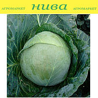 Артек F1 семена капусты белокачанной средней Lucky Seed 10 000 семян