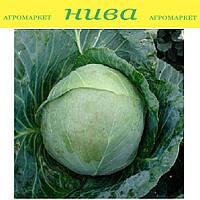 Артек F1 насіння капусти б/к середньої Lucky Seed 10 000 насінин Акція! (2 по ціні 1)