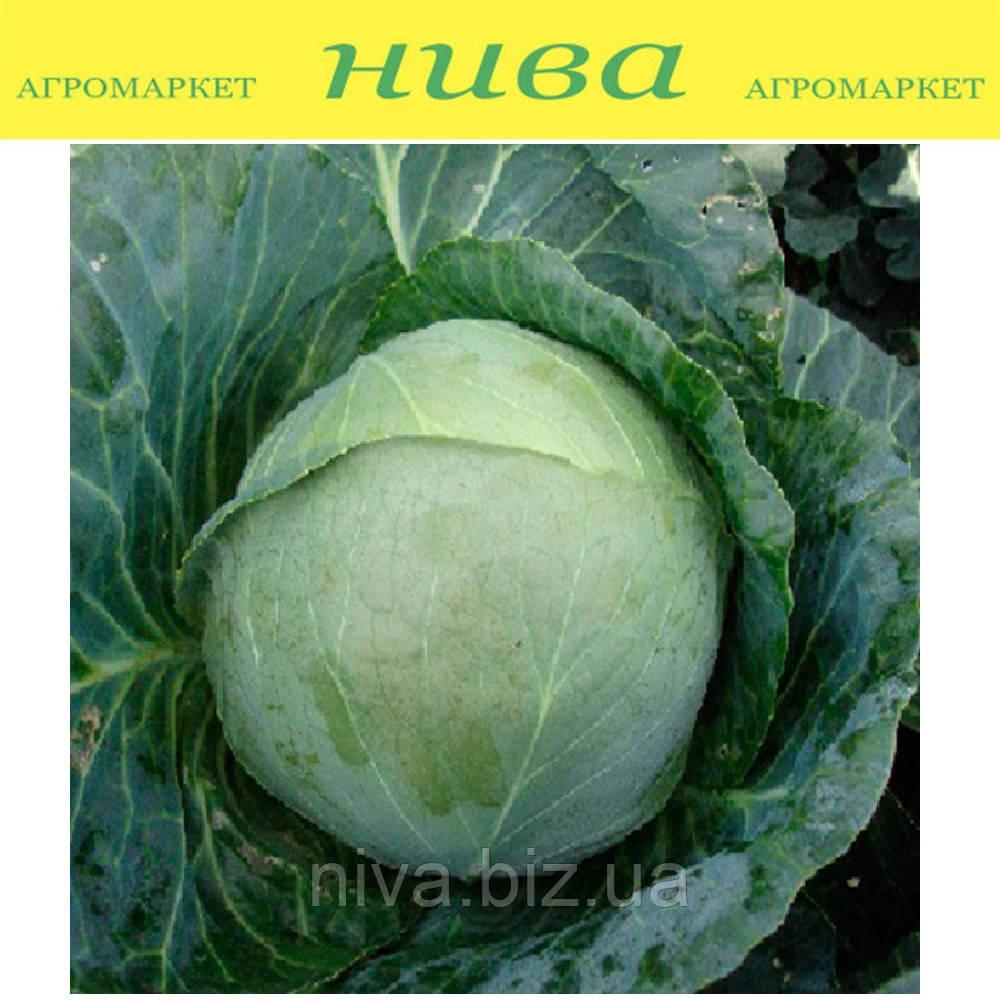 Артек F1 насіння капусти б/к середньої Lucky Seed 25 насінин