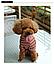 Костюм для животных Добаз , Dobaz Stripes cotton бордовая полоска , фото 5