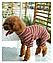 Костюм для животных Добаз , Dobaz Stripes cotton бордовая полоска , фото 6