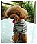 Костюм для животных Добаз , Dobaz Stripes cotton оливковая полоска , фото 5