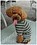 Костюм для животных Добаз , Dobaz Stripes cotton оливковая полоска , фото 6