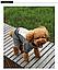 Костюм для животных Добаз , Dobaz  Chicago серый , фото 5