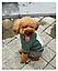 Костюм для животных Добаз , Dobaz  Chicago зеленый  , фото 5