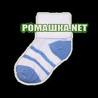 Детские тонкие носки р. 56-62 для новорожденного 95% хлопок 5% эластен ТМ Ромашка 3484, Голубой