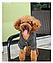 Костюм для животных Добаз , Dobaz Magic Kitty серый , фото 5
