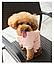 Костюм для животных Добаз , Dobaz Magic Kitty персиковый , фото 5