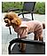 Костюм для животных Добаз , Dobaz Magic Kitty персиковый , фото 6